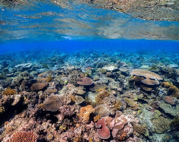 The Great Barrier Reef has lost half its corals, study shows
